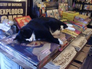 Cat-asleep-on-books