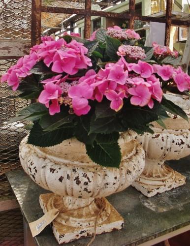blog---petersham-nursery--plants3--2013