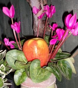 apple-hiding