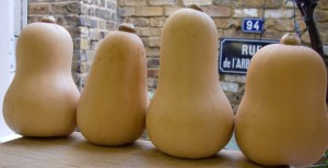 row-of-Pumpkins