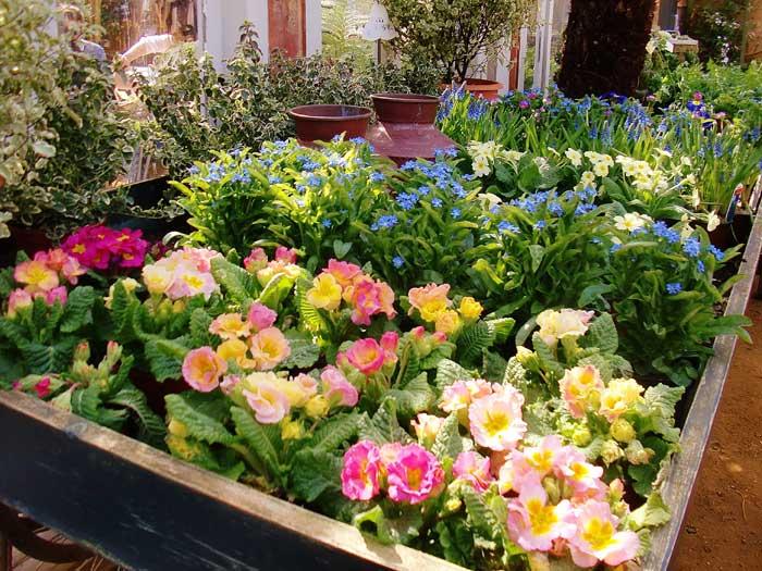 blog---petersham-nursery--plants1--2013